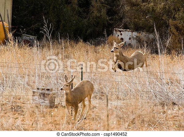 Jumping Deer - csp1490452