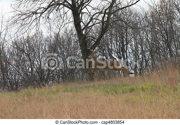 Jumping Deer - csp4803854