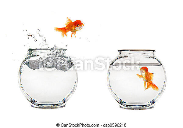 Jumping Goldfish - csp0596218