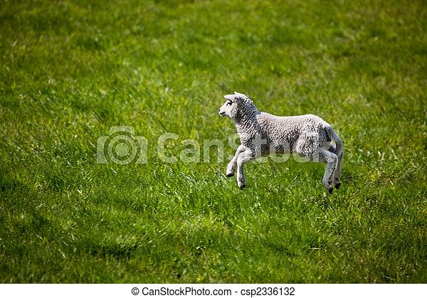Jumping Lamb - csp2336132