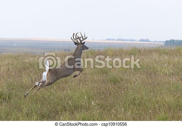 Jumping Whitetail Deer Buck - csp10910556