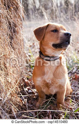 junger hund, hayfield - csp14510480