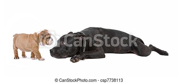 junger hund, hund - csp7738113