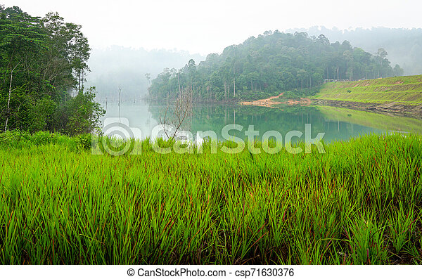 Jungle and lake landscape - csp71630376