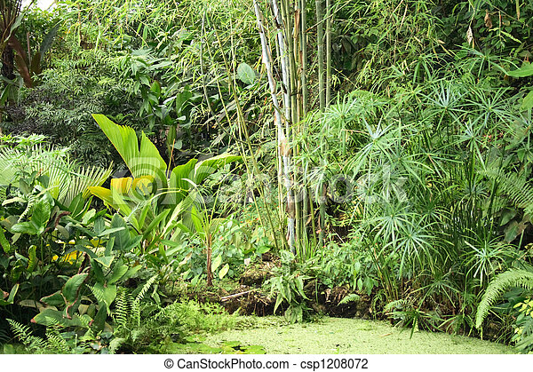 Jungle Background Very Nice Natural Green Jungle With Small Lake Canstock