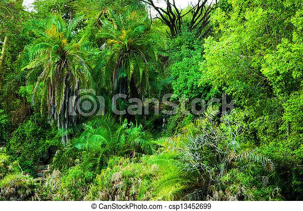 Jungle, bush trees background in Africa. Tsavo West, Kenya - csp13452699