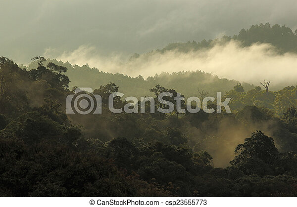 jungle forest and mountain with mist - csp23555773