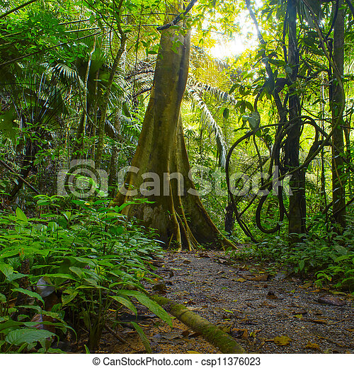 Jungle forest with tropical trees. Adventure background - csp11376023