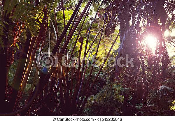 Jungle in Hawaii - csp43285846