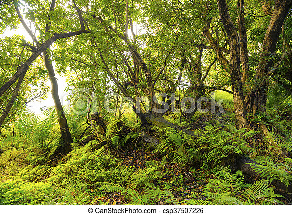jungle paysage africaine vibrant foug res arbres vert photo de stock rechercher. Black Bedroom Furniture Sets. Home Design Ideas