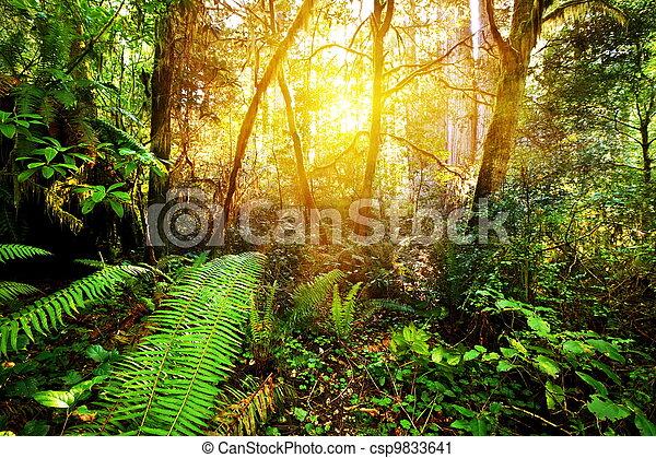 Jungle - csp9833641