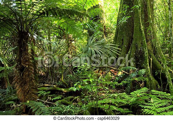 Jungle - csp6463029