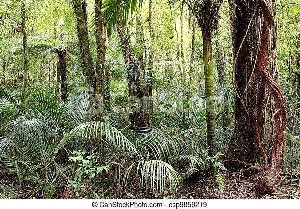 Jungle - csp9859219
