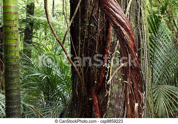Jungle - csp9859223