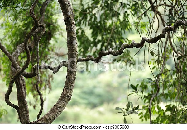 jungle vines detail - csp9005600