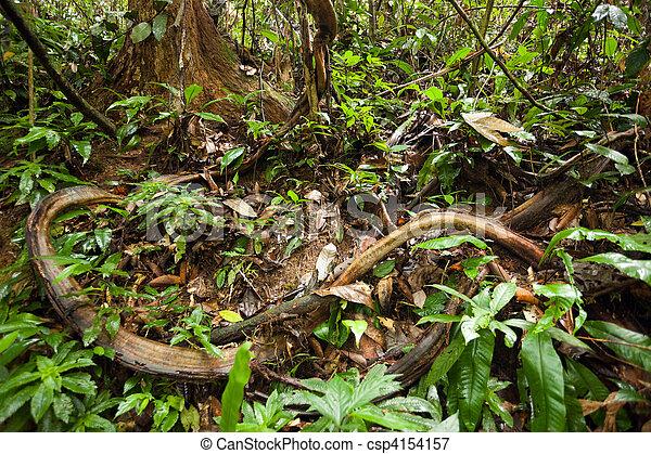 jungle vines - csp4154157
