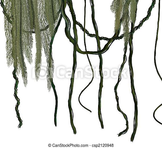 Jungle Vines - csp2120948