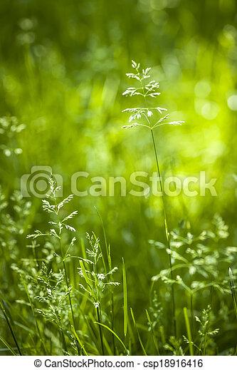 La hierba verde de junio floreciendo - csp18916416