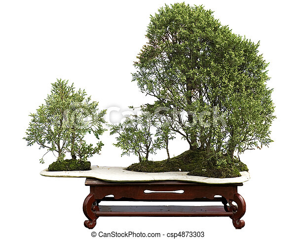 juniper bonsai - csp4873303