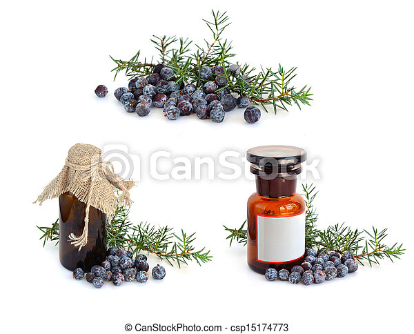 Juniper branch and berries with pharmaceutical bottles. - csp15174773