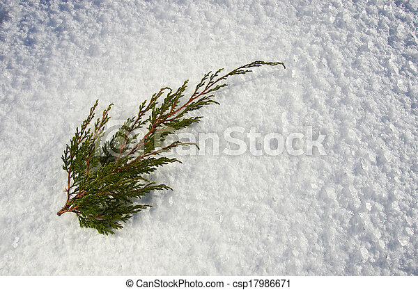 Juniper twig - csp17986671