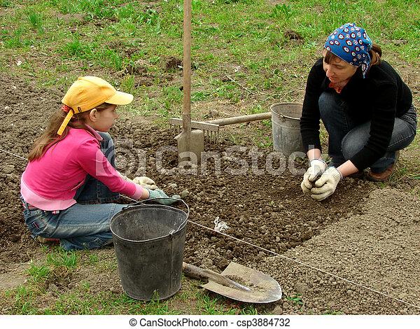 Jardinería juntos - csp3884732