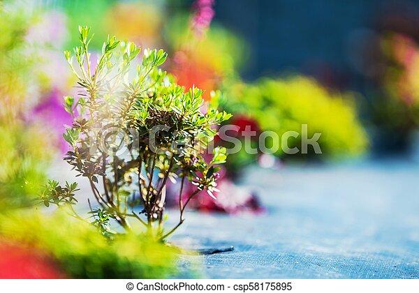 Just Created Small Garden - csp58175895