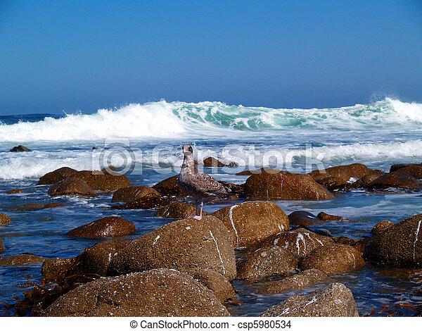 Juvenile Seagull Enjoying the Waves - csp5980534