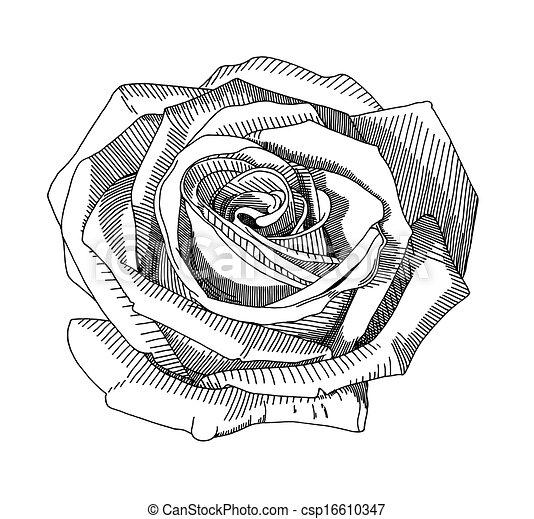 kéz, rajzol, skicc, rózsa - csp16610347