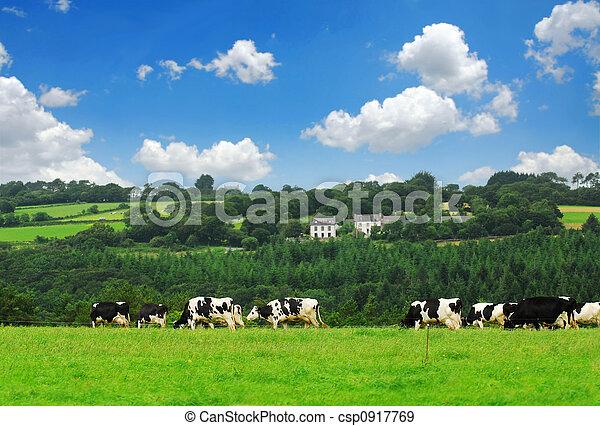 kühe, weide - csp0917769