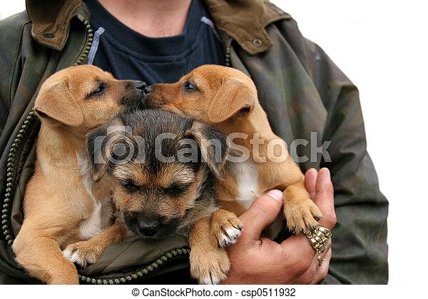 küssende , hundebabys - csp0511932