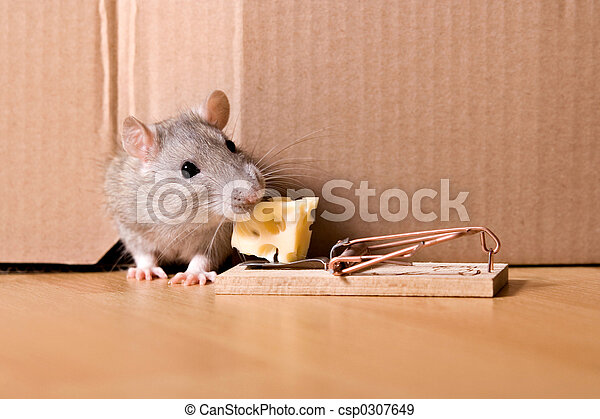 kaas-rat-muizenval-stockfotografie_csp0307649.jpg