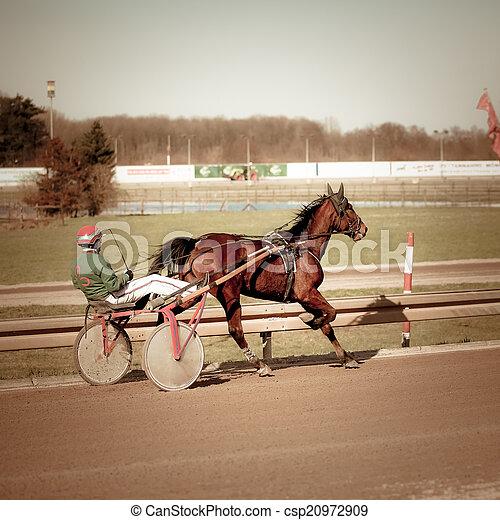 kabelstrang- laufen, .horse - csp20972909
