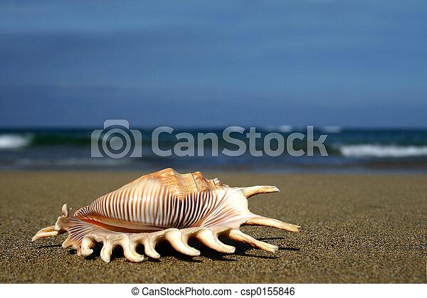 kagyló, tengerpart - csp0155846