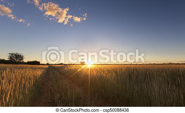 Kalahati sunset with trees grass and blue sky - csp50088436