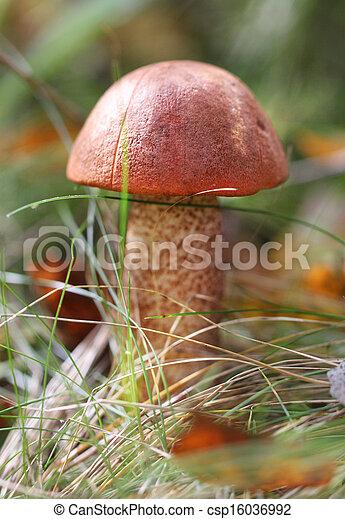 lejárt gombák)