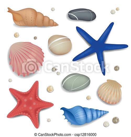 kamyki, rozgwiazdy, wektor, seashells - csp12816000
