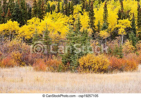 Kanada Bunte Taiga Wald Herbst Boreal Yukon Kanada Goldenes