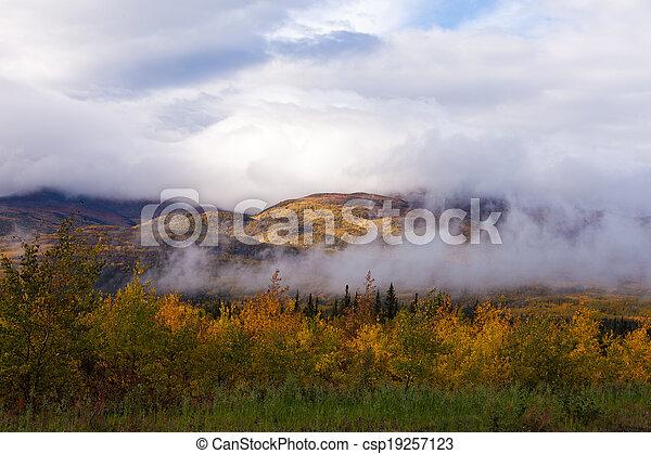 Kanada Hugel Taiga Wald Herbst Neblig Boreal Yukon Nebel