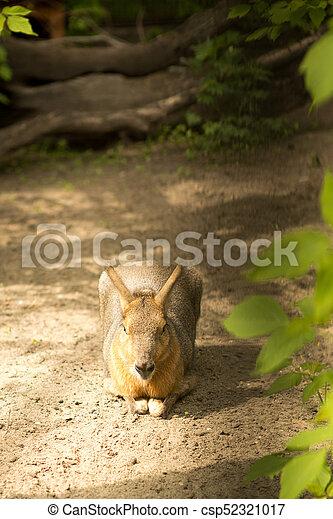 Kangaroo - csp52321017