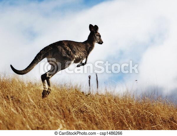 Kangaroo - csp1486266