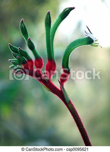 Kangourou, fleurs, -, patte. Emblème, patte, kangourou ...