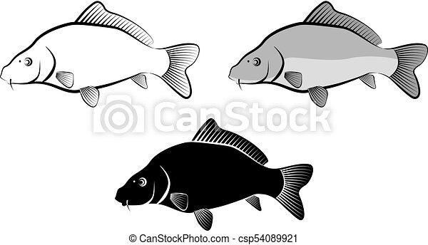 Umeni Skripec Kapr Osamoceny Ilustrace Radka Fish