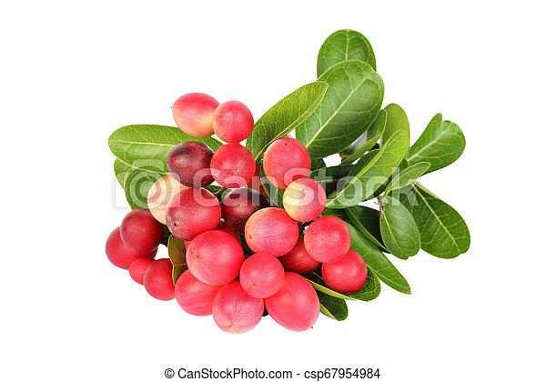 Karanda fruit on white background - csp67954984