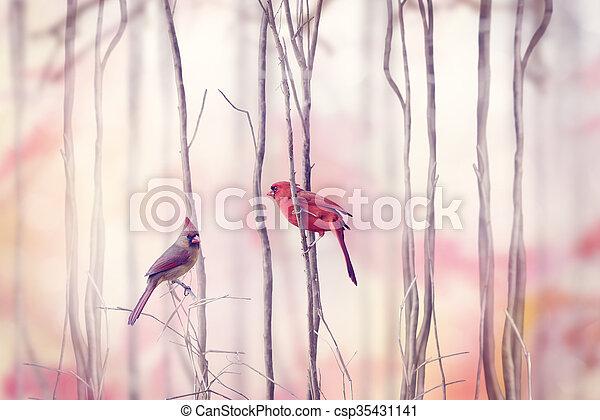 kardinaal, vogels, noordelijk - csp35431141