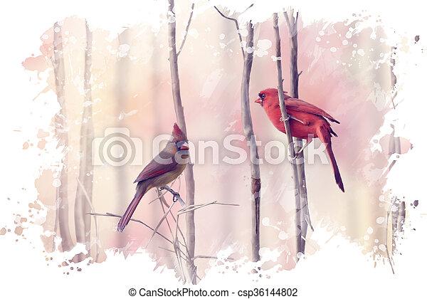 kardinalen, watercolor, twee, noordelijk - csp36144802