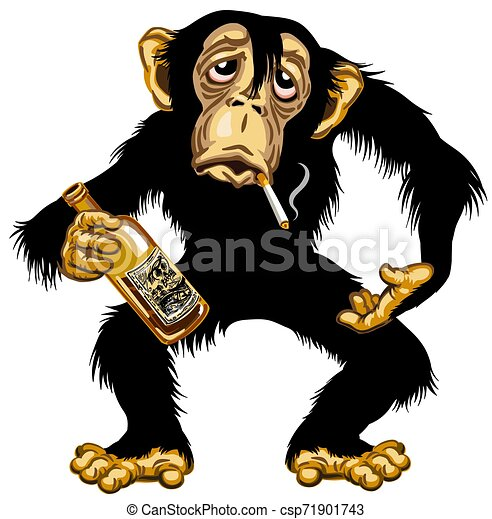 karikatur, schimpanse, betrunken - csp71901743