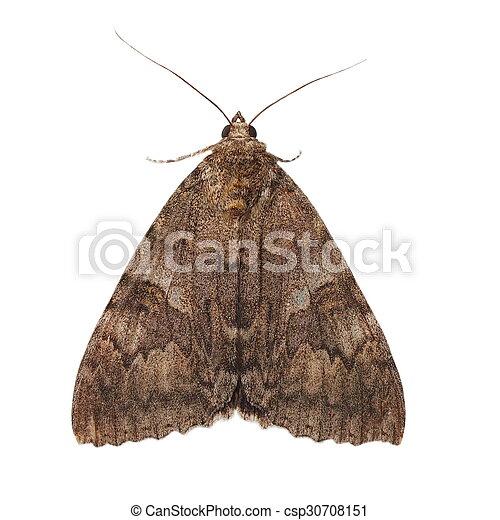 karmozijnrood, minsmere, moth, underwing - csp30708151
