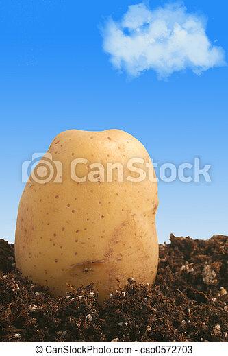 Kartoffel auf Erde - csp0572703