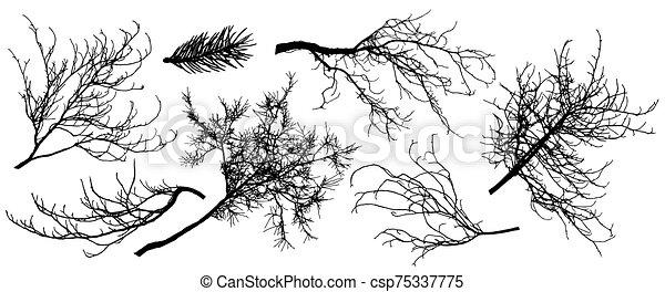 kastanie, bäume., silhouette, tanne, illustration., satz, baum, linde, vektor, zweig, eiche, usw. - csp75337775